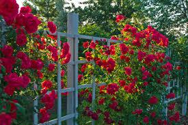 rose garden ideas garden ideas and garden design