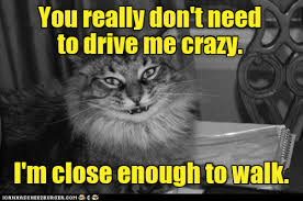 Crazy Cat Memes - lolcats crazy lol at funny cat memes funny cat pictures with
