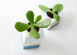 Succulent Planter Diy by Easy Diy Succulent Planter