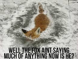 What Did The Fox Say Meme - aaaaaaaaaaaaaaand the fox says nothing imgur