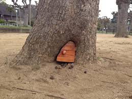 mysterious tiny door in san francisco tree replaced with inferior