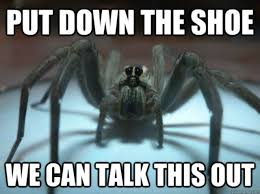 Funny Spiders Memes Of 2017 - the 20 funniest animal memes