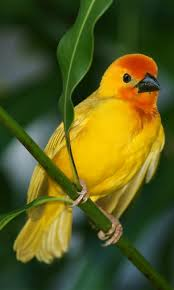 bird wallpapers the 25 best bird wallpaper ideas on pinterest bird wallpaper bird