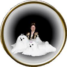 american eskimo dog new zealand patrician maltese new zealand phantom