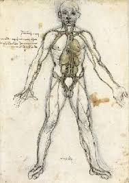 leonardo da vinci anatomical drawings heart lungs arteries