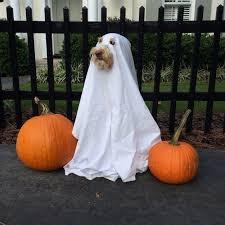 Small Dog Halloween Costumes Ideas 25 Dog Halloween Costumes Ideas Dog Halloween