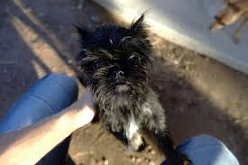 buy a affenpinscher my favorite cameras for usability ability and versatility mid