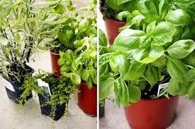 How To Grow A Bulb In A Vase How To Make A One Pot Indoor Herb Garden Kitchn