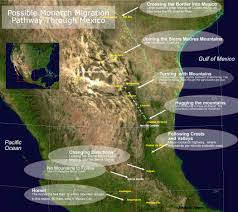 Migration Map Monarch Butterfly Migration Journey North Citizen Science