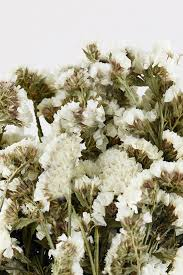 white statice flowers