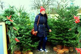 christmas tree shopping leave the car at home its more fun