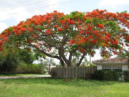 a beautifully shaped tree and the most amazing color everyone