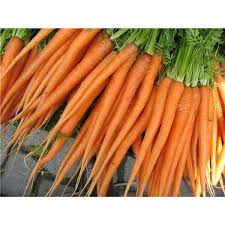 preschool lesson plan on carrots learning with carrots