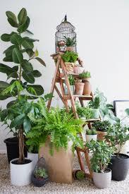 indoor plants create your own indoor garden