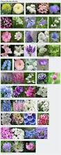mesmerizing cut flower garden plan 49 for your interior designing