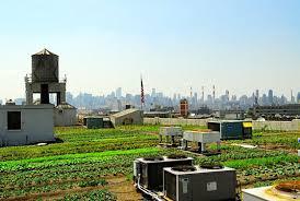 "Les fermes urbaines à DETROIT (USA) : ""Urban farming"""