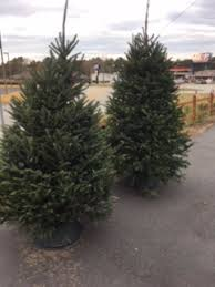 live christmas trees live christmas trees in toccoa ga tara s happies for you floral