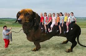 Weiner Dog Meme - 22 random funny pics for the weird and nutty team jimmy joe