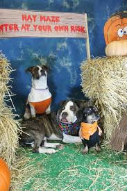 Halloween Costumes Dogs Cutest Puppy Costumes 2011 190 Pet Costumes Images Pet Costumes Puppies