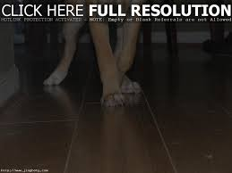 Laminate Floor Scratch Repair Do Dogs Nails Scratch Wood Floors Wood Flooring