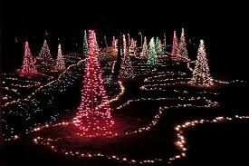 lighted christmas tree beautiful lighted christmas trees everywhere picture of