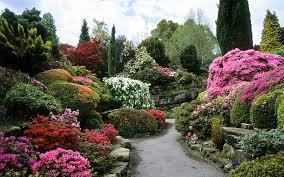 Desktop Rock Garden Flowers Rock Garden Leonardslee Flowering Japanese Azaleas