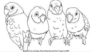draw love birds parakeets