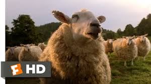 Alpaca Sheep Meme - babe 7 9 movie clip the sheep password 1995 hd youtube