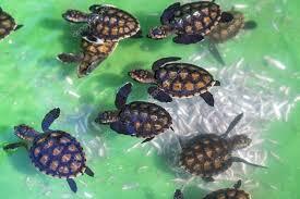 imagenes tortugas verdes tortugas verdes bebé foto de stock trubavin 71863689