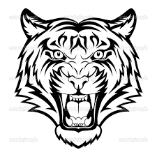 draw the face of a tiger photo album how to draw a face tiger