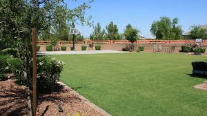 Backyard Vineyard Design by Landscaping Backyard Landscaping Desert Landscaping