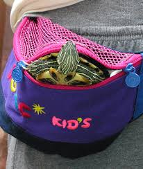 in which state is it illegal to dress up as a priest on halloween meet the turtles that hibernate in mini fridges and cruise in