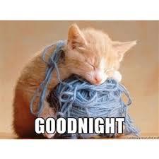 Cat Memes Generator - wooly kitty goodnight meme generator polyvore