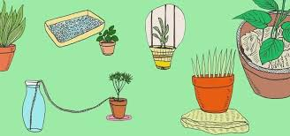10 Best Houseplants To De by 6 Diy Tips For Watering Your Houseplants While Away On Vacation