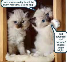 Kittens Memes - kyoot kittens present lolcats lol cat memes funny cats