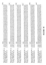 patent us7879338 vectors and methods for immunization against