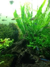 Aquascaping Plants Les 944 Meilleures Images Du Tableau Aquascape Plants Sur