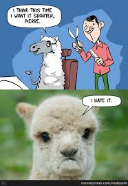 Alpaca Sheep Meme - dat haircut by nedesem meme center