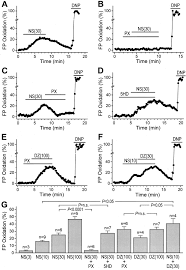 mitochondrial ca2 activated k channels in cardiac myocytes