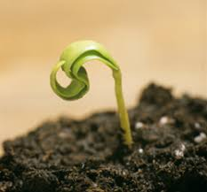 How To Save A Dying Plant All About Pumpkins Learn How To Grow Pumpkins Basic Information
