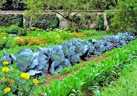 Gardening Layout Vegetable Gardening Layout The Best Pairings Loyalgardener