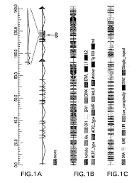 patent us20100256062 allelic variants of human factor viii