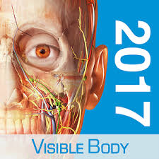 Google Body Anatomy Human Anatomy Atlas 2017 Android Apps On Google Play