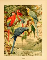 By Hanging 1898 Shower Curtain For Sale By Science Source 543 Best Nature U0026 Science Images On Pinterest Bird Bird Prints