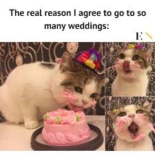 Funny Animal Memes - 10 funny animal memes that will definitely brighten up your day