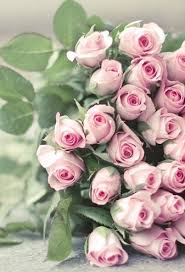 Image For Flowers Best 25 Beautiful Roses Ideas On Pinterest Beautiful Flowers