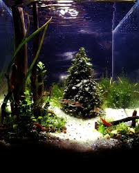 Aquascape Tree Underwater Pine Tree The Planted Tank Forum