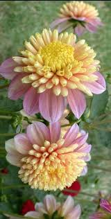 624 best flowers images on pinterest plants flowers garden and