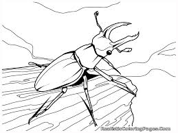 beetle coloring page getcoloringpages com