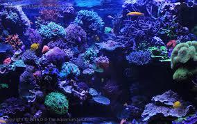 aquarium the masterpiece aquarium of david saxby coral featured reefs